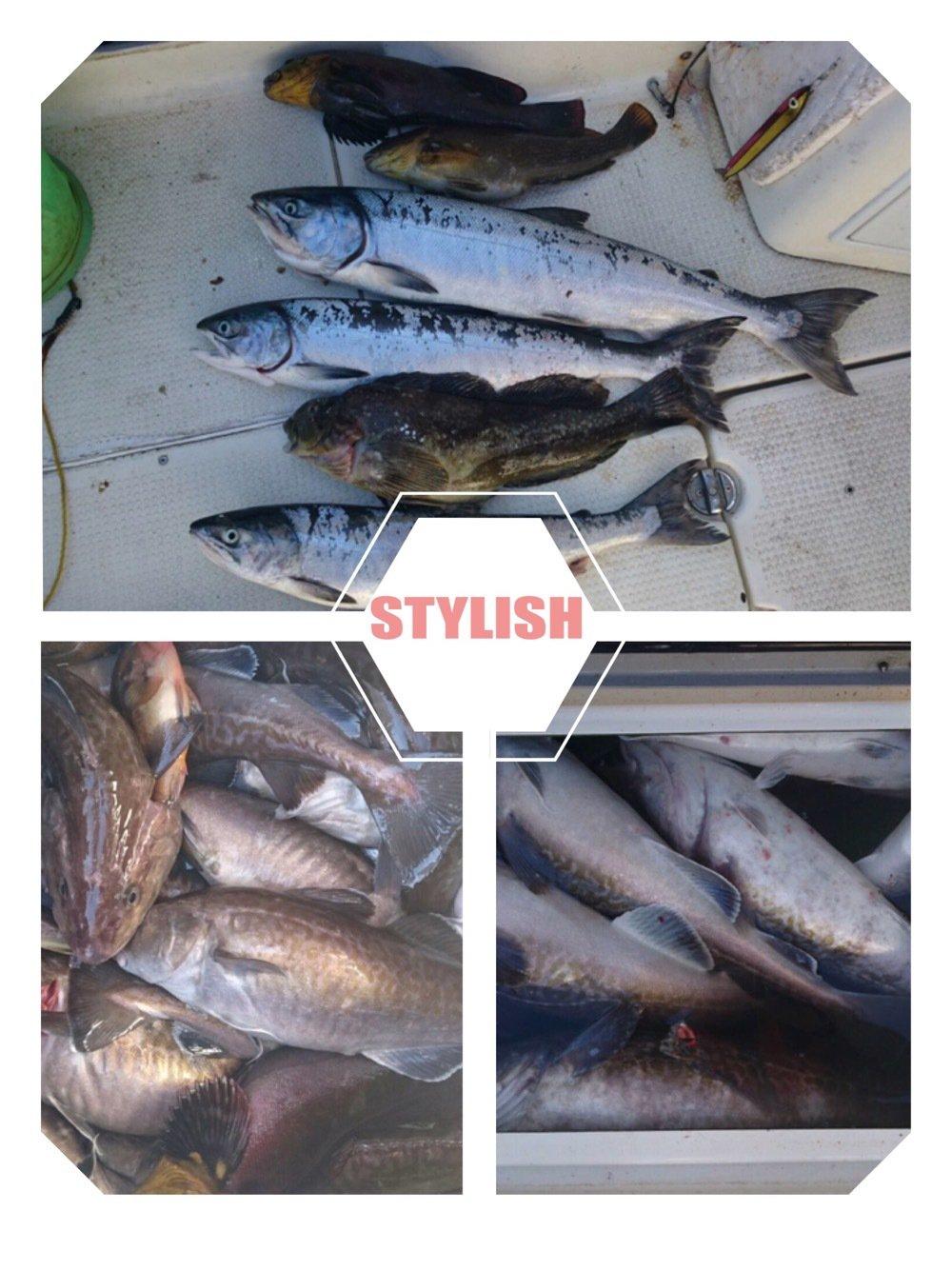 岩谷昌幸さんの投稿画像,写っている魚はサケ