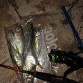 ビギナー釣り師さんの石川県輪島市での釣果写真