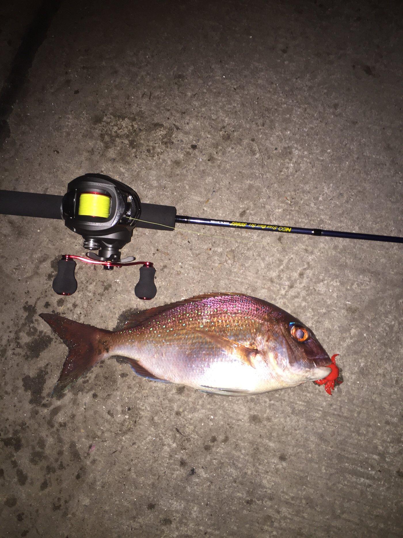 masasiさんの投稿画像,写っている魚はマダイ