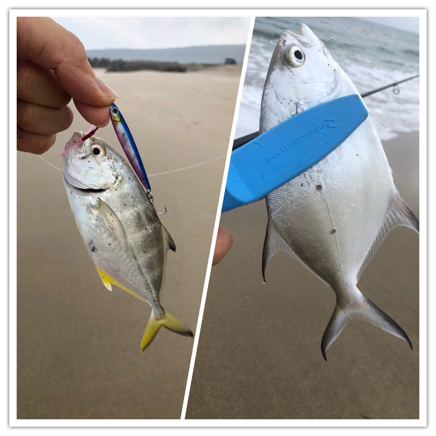 ヨウスケさんの投稿画像,写っている魚はギンガメアジ,コバンアジ