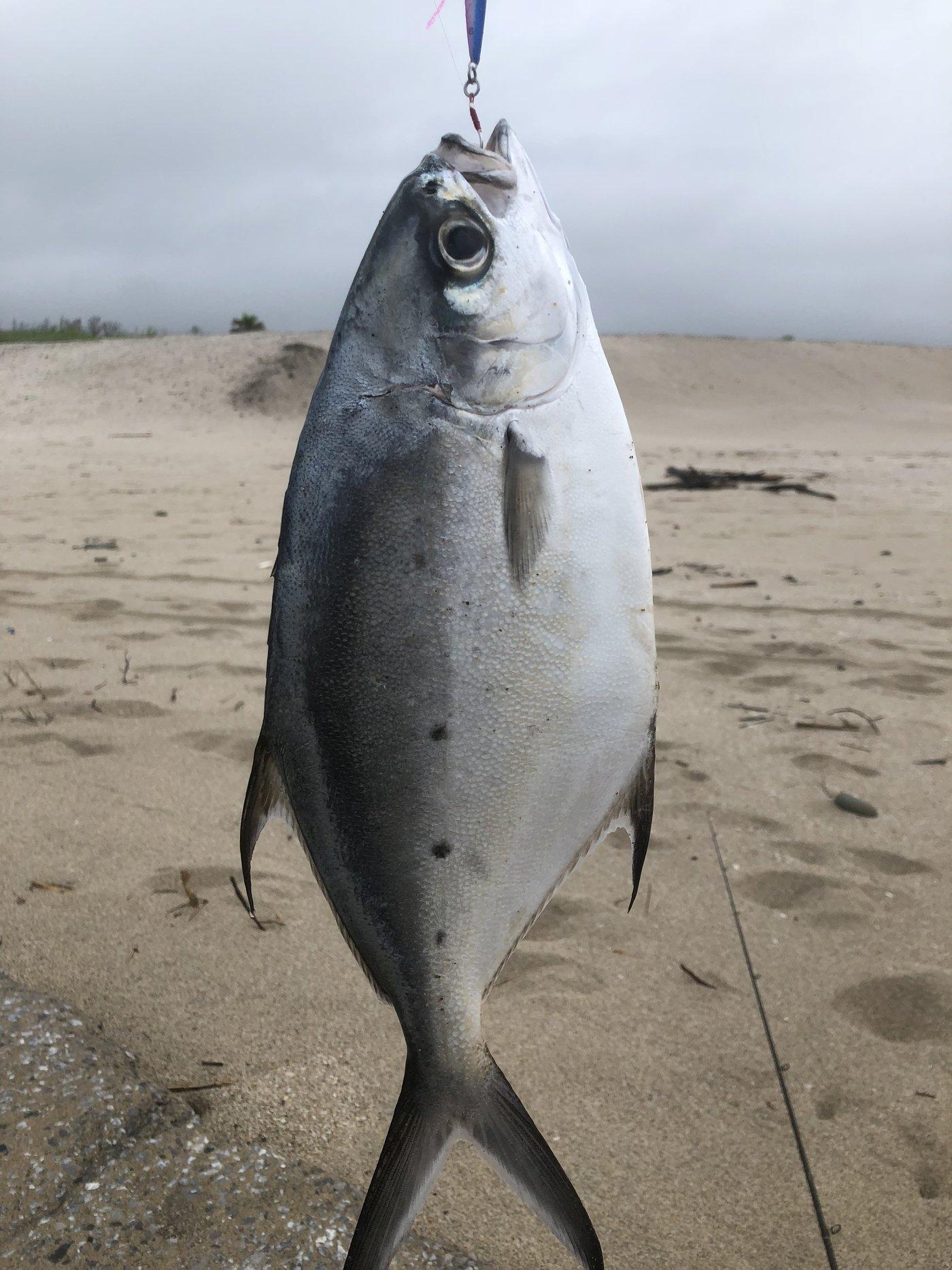 ヨウスケさんの投稿画像,写っている魚はコバンアジ