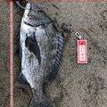 焼き鳥@つり政宗さんの宮城県亘理郡での釣果写真