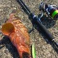 のどごし生さんの新潟県西蒲原郡での釣果写真