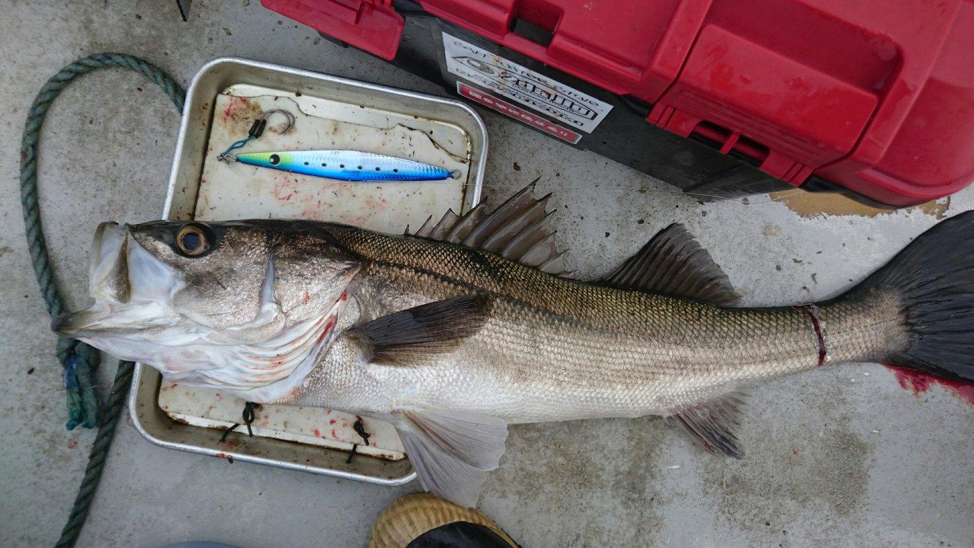 ツカサさんの投稿画像,写っている魚はスズキ