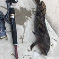 八戸釣りさんの青森県八戸市での釣果写真