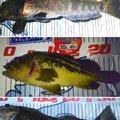 かなぼうさんの北海道でのアイナメの釣果写真