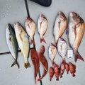 凜咲さんの兵庫県でのカサゴの釣果写真