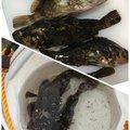そらさんの愛知県でのタケノコメバルの釣果写真