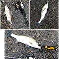 かずさんの千葉県船橋市での釣果写真