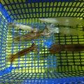 デコ8さんのスルメイカの釣果写真