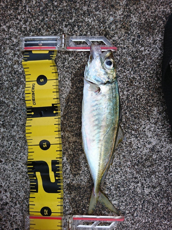 みっちぃさんの投稿画像,写っている魚はアジ