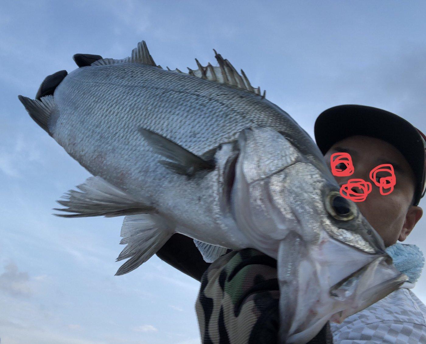 け〜たゴリラさんの投稿画像,写っている魚はヒラスズキ