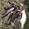 maruryoさんの宮城県石巻市での釣果写真