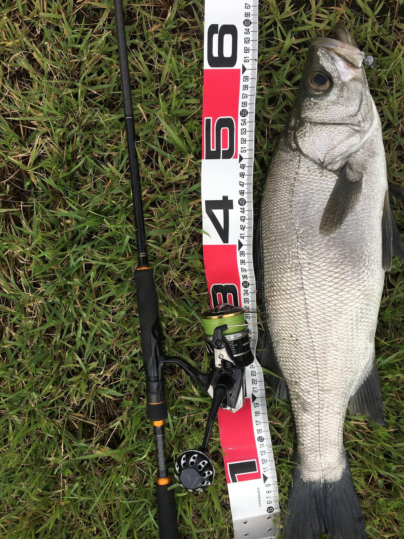 健斗さんの投稿画像,写っている魚はヒラスズキ