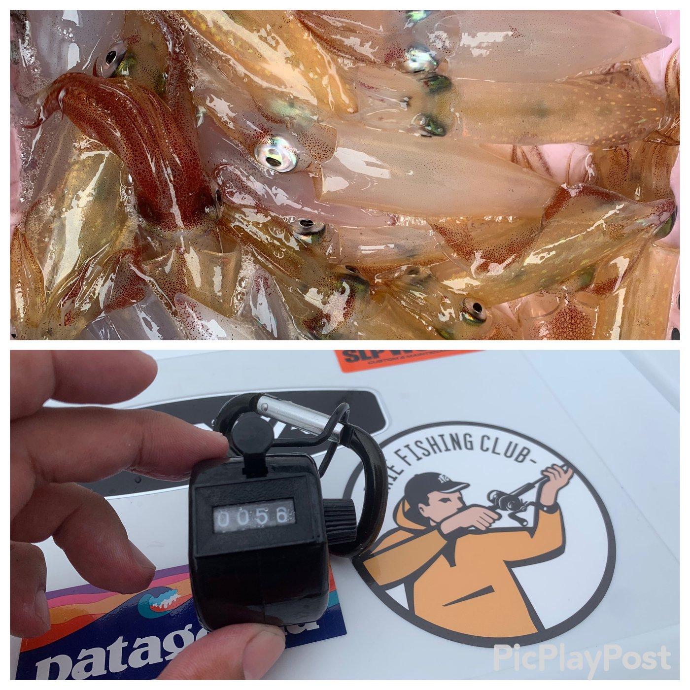 よーすけ。さんの投稿画像,写っている魚はケンサキイカ,スルメイカ