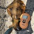 ミゾケンガーさんの長崎県雲仙市でのアオリイカの釣果写真