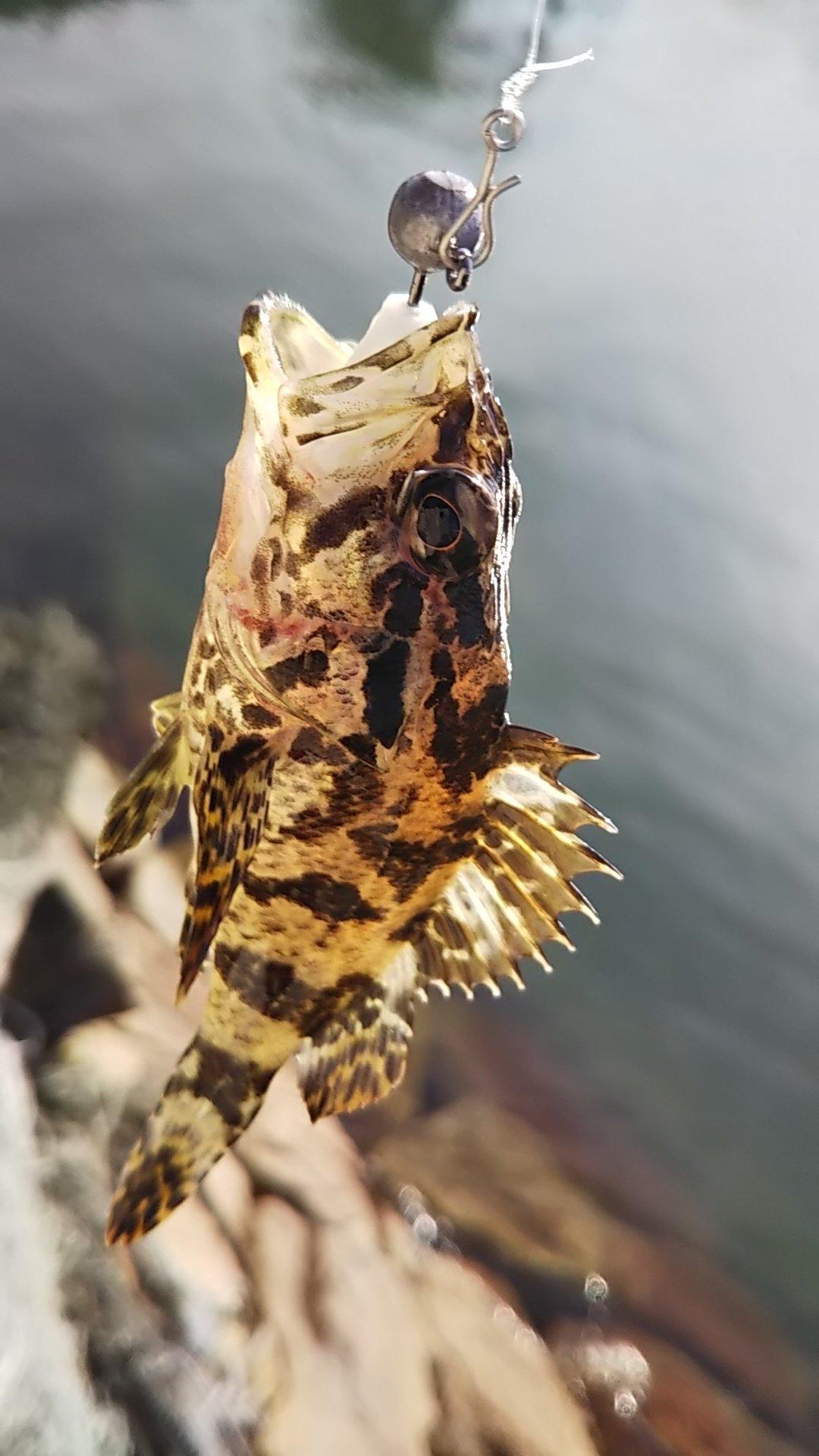 光さんの投稿画像,写っている魚は