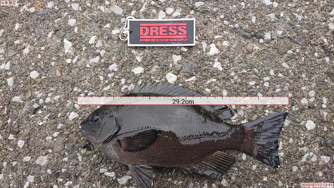 ヒロさんの投稿画像,写っている魚はメジナ
