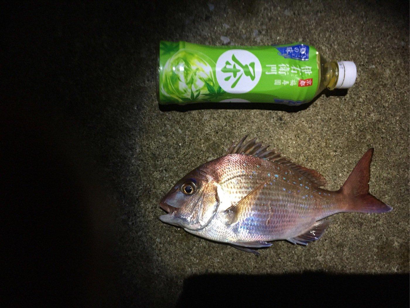 ママカリさんの投稿画像,写っている魚は