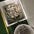 ラテス81さんの大分県での釣果写真