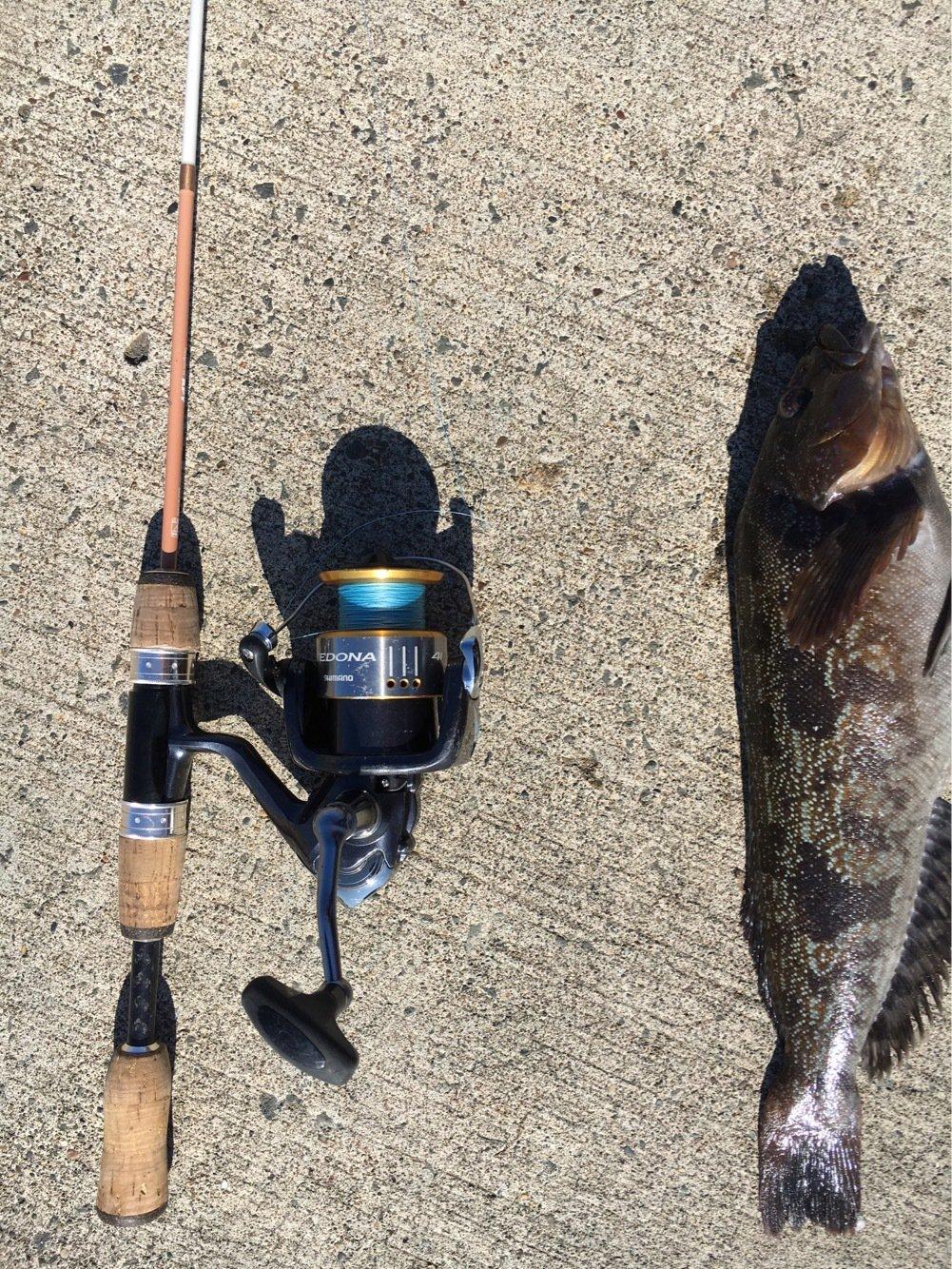 釣り馬鹿さんの投稿画像,写っている魚は
