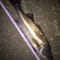マーシーさんの千葉県習志野市での釣果写真