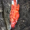 もっしぃさんの和歌山県東牟婁郡での釣果写真