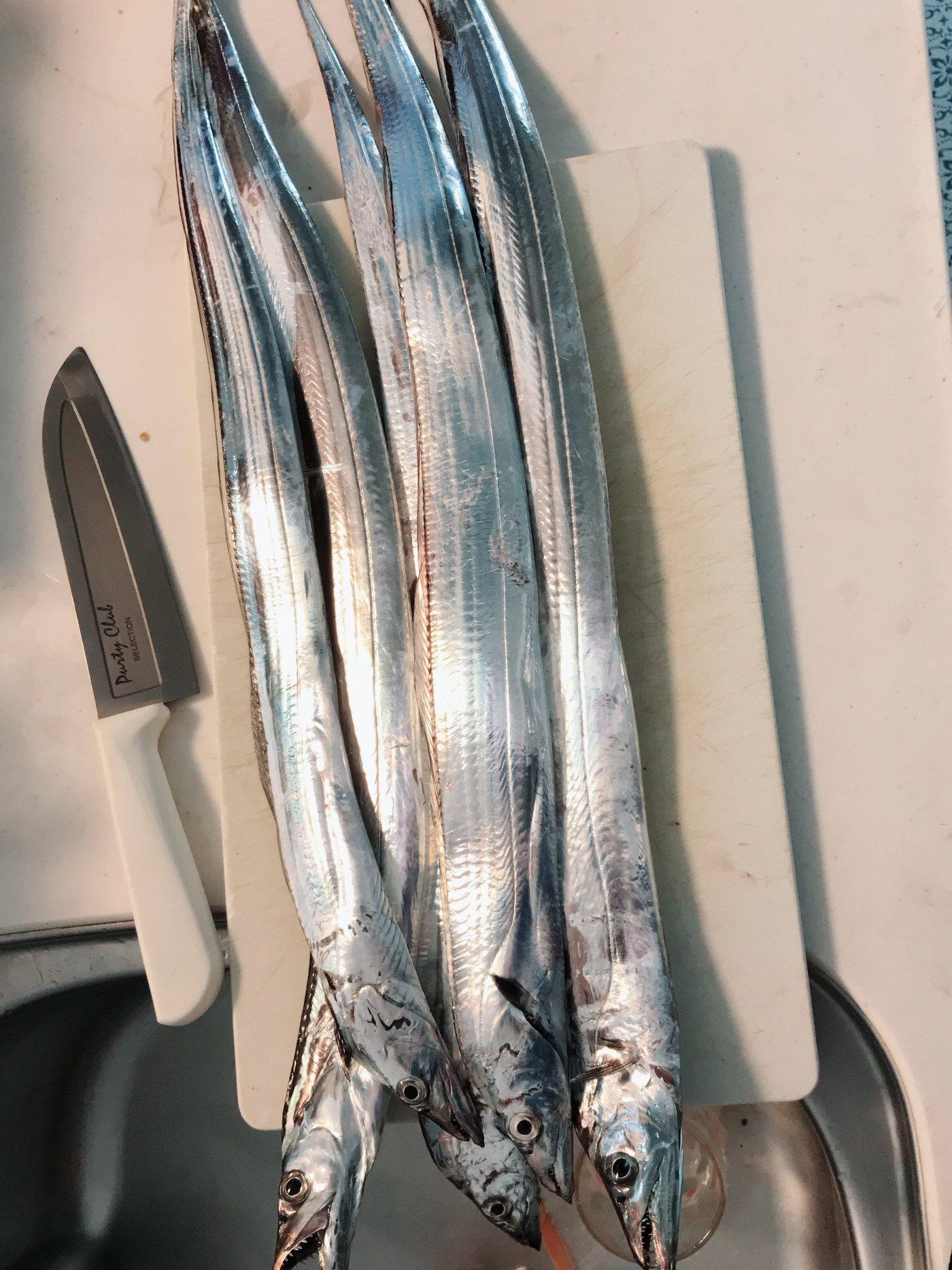 山崎 克彦さんの投稿画像,写っている魚はタチウオ