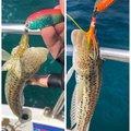 yoshiさんのトラギスの釣果写真