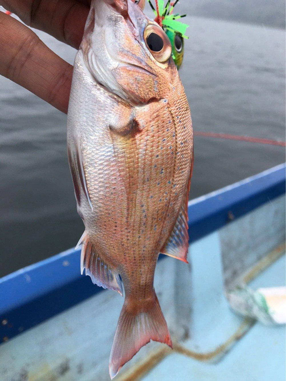ジーゴさんの投稿画像,写っている魚はマダイ
