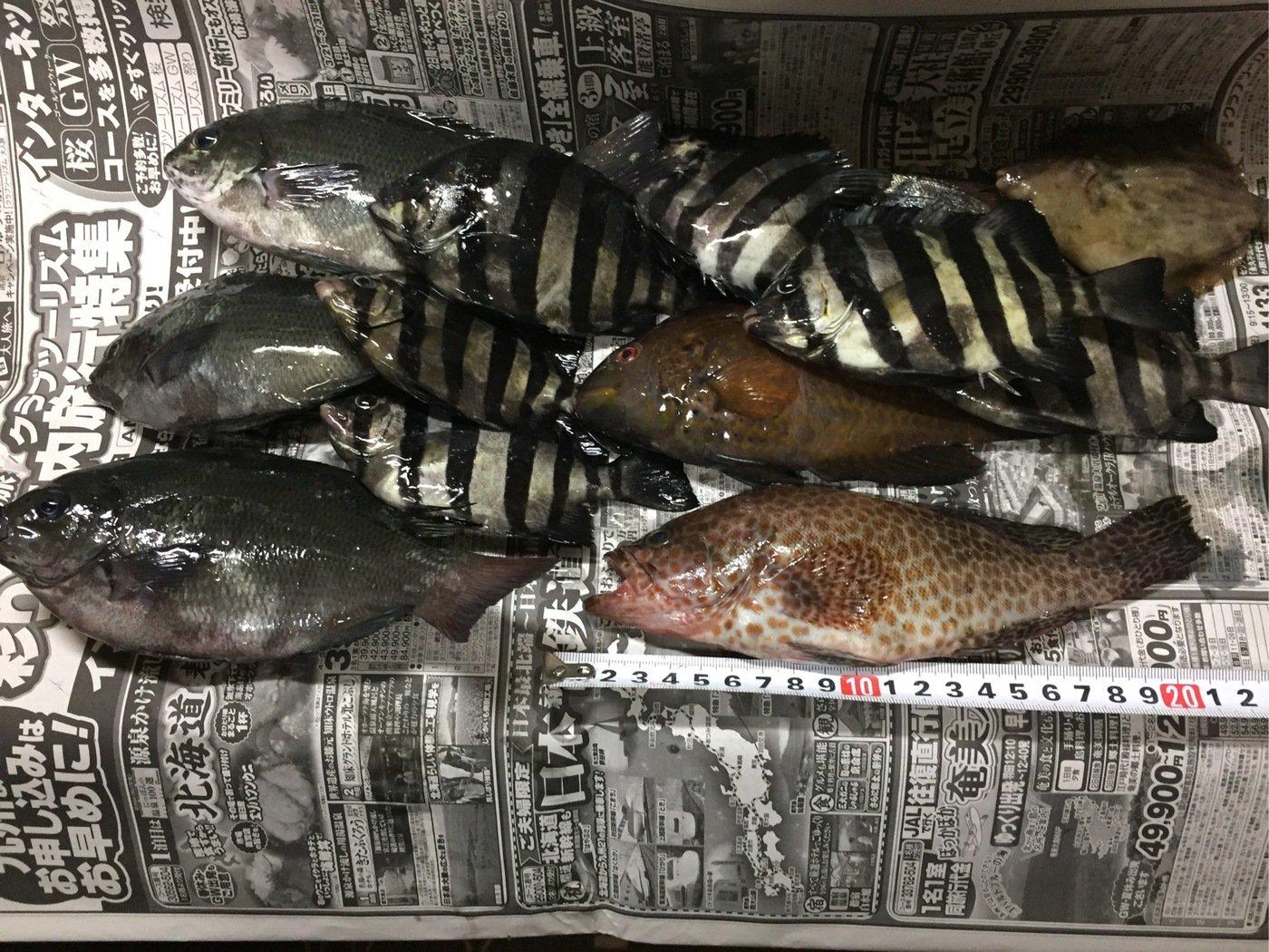 alema_hiroさんの投稿画像,写っている魚はイシダイ