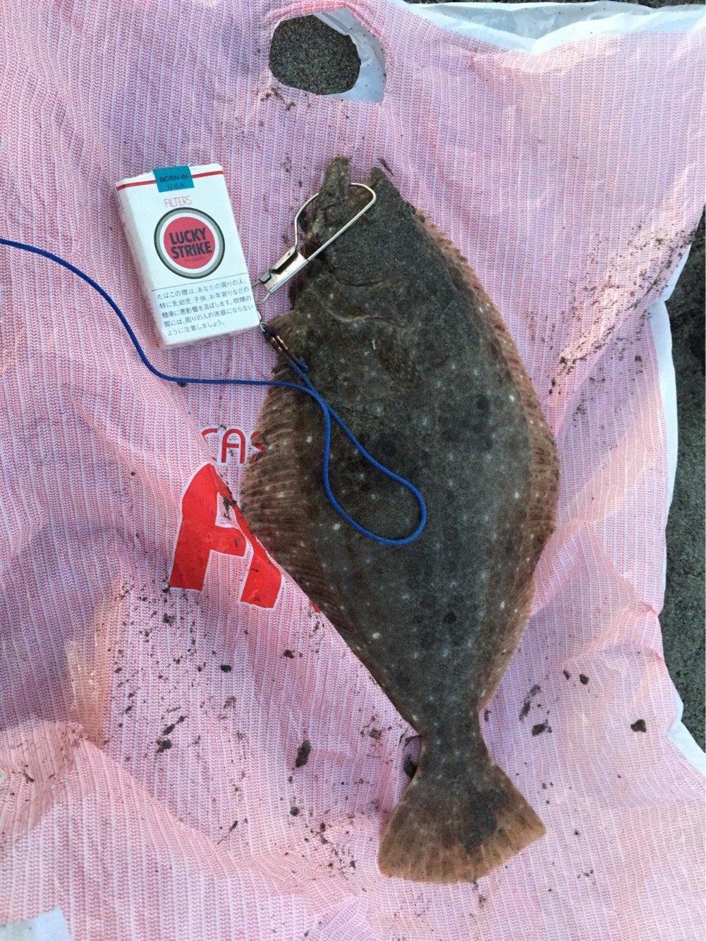 おがけいさんの投稿画像,写っている魚はヒラメ