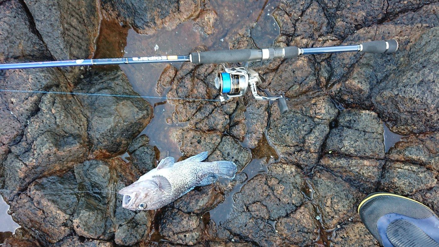masaruさんの投稿画像,写っている魚はキツネメバル