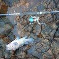 masaruさんの青森県でのキツネメバルの釣果写真