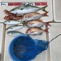 グル ヤマダさんの兵庫県加古川市での釣果写真