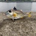 Yohei Hosokawaさんの東京都での釣果写真