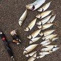 バッシーさんの徳島県での釣果写真