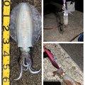 アナハゼくんさんの和歌山県有田市での釣果写真