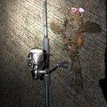 しまさんの島根県益田市での釣果写真