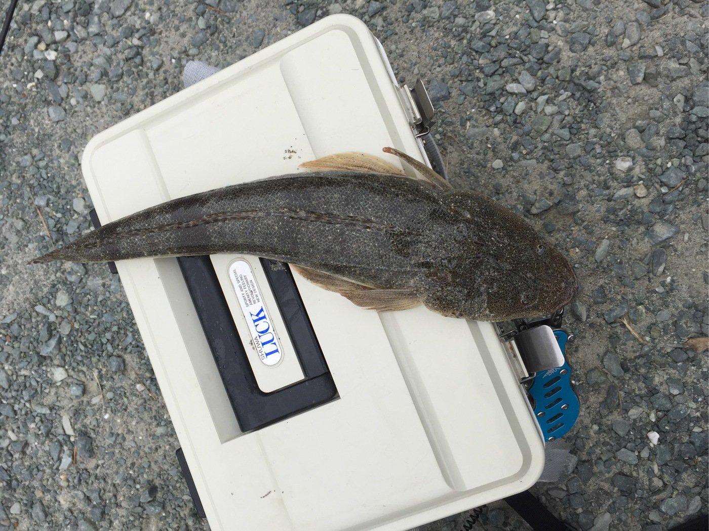 おがけいさんの投稿画像,写っている魚はエンマゴチ