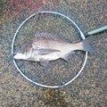 びりんどさんの佐賀県での釣果写真