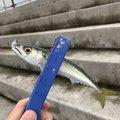 はなぶささんの兵庫県明石市での釣果写真