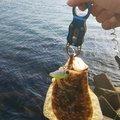 うださんの島根県での釣果写真