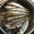 まるわたろうさんの神奈川県逗子市での釣果写真