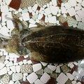 四谷一郎さんのコウイカの釣果写真