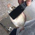 草リグさんの千葉県館山市での釣果写真