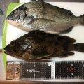 まささんの福岡県行橋市での釣果写真