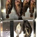 うそやまさんの三重県四日市市での釣果写真