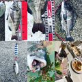 MAX The fishingさんの兵庫県神戸市での釣果写真
