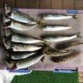 ナリ魚さんの宮城県多賀城市での釣果写真